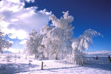 Вы только посмотрите на эту красавицу-зиму :)
