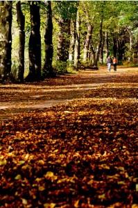 Осінні краєвиди прекрасні особливо коли на них дивляться дві закохані людини