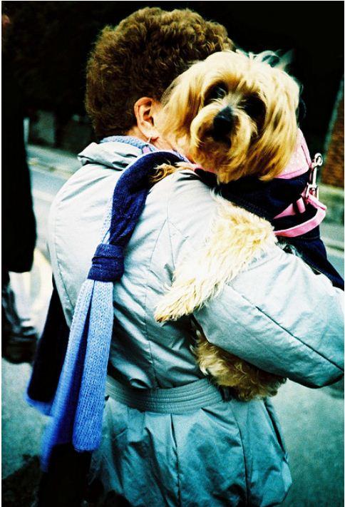 Дама с собачкой... Фото by wozza