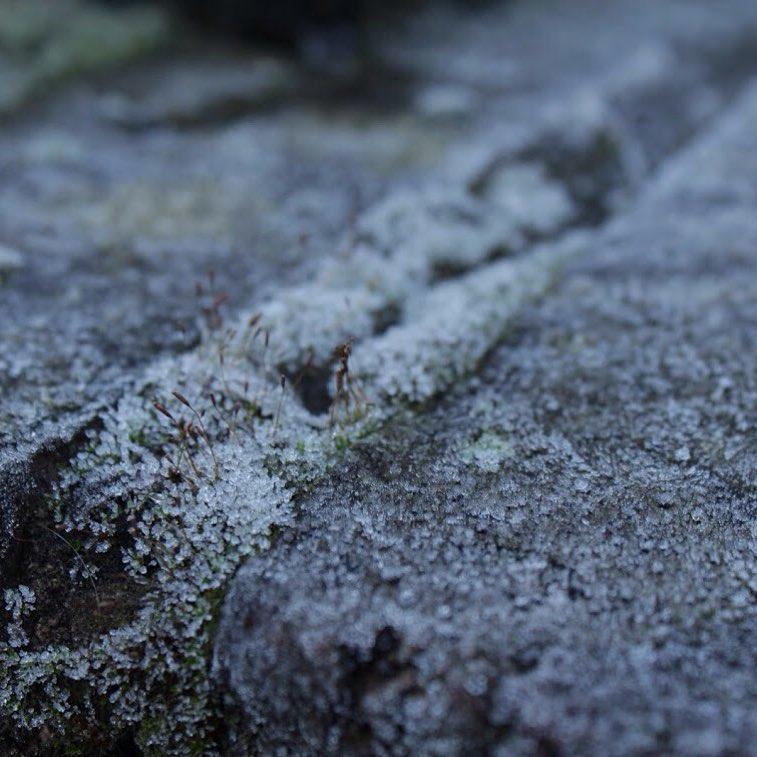 Моя зима у макрознімку. Погляд Мері - вірші про зиму і життя