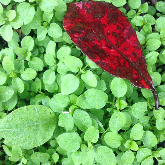 Зелено і весняно? Be different ;) #redleaf
