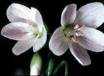 История любви цветка и солнца. Красивая любовь в стихах
