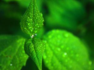 Зелено-зелена неділя або Трійця - це чудовий привід зустрітися родиною