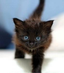 Чорним котам і чорненьким котенятам присвячується
