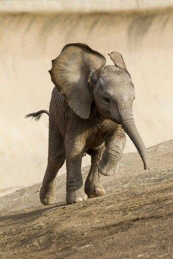 слон, elephant, funny elephants, running elephant, слоник, слоники, веселий слон
