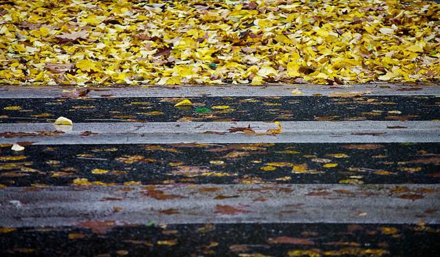 Такий-от листопадовий вірш, майже зимовий, але все ще осінній / Фото подяка  flickr.com/Orbmiser