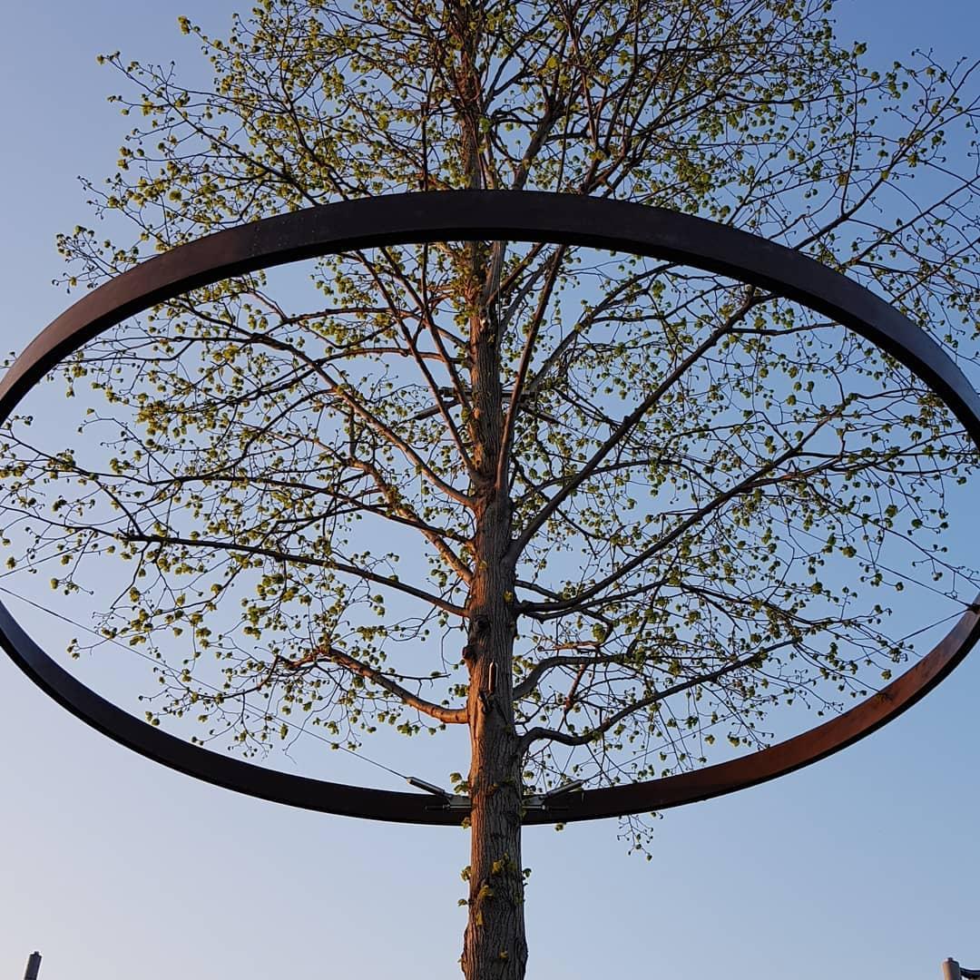Не дерево, а арт-об'єкт